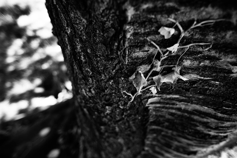 Trees, Plants, Flowers... by Laurent Orseau #122