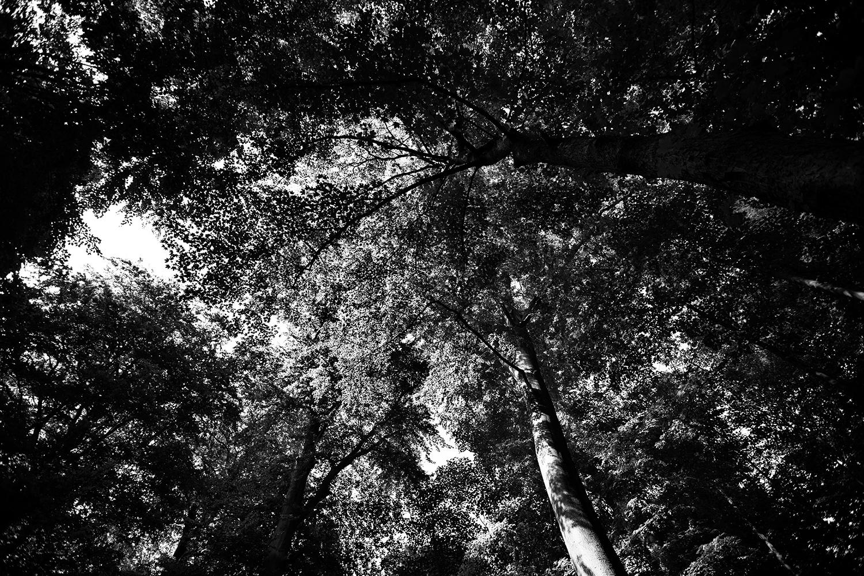 Trees, Plants, Flowers... by Laurent Orseau #124