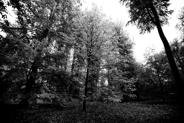 Trees, Plants, Flowers... by Laurent Orseau #127