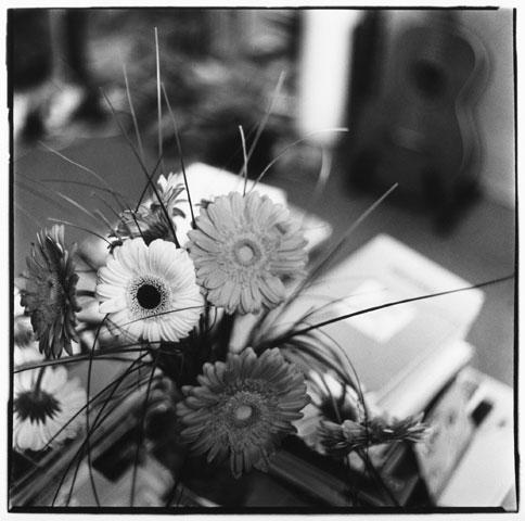 Trees, Plants, Flowers... by Laurent Orseau #13