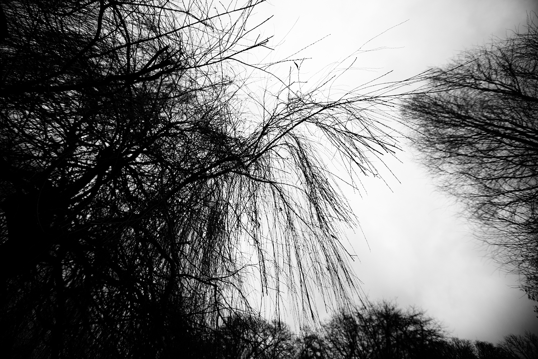 Trees, Plants, Flowers... by Laurent Orseau #138