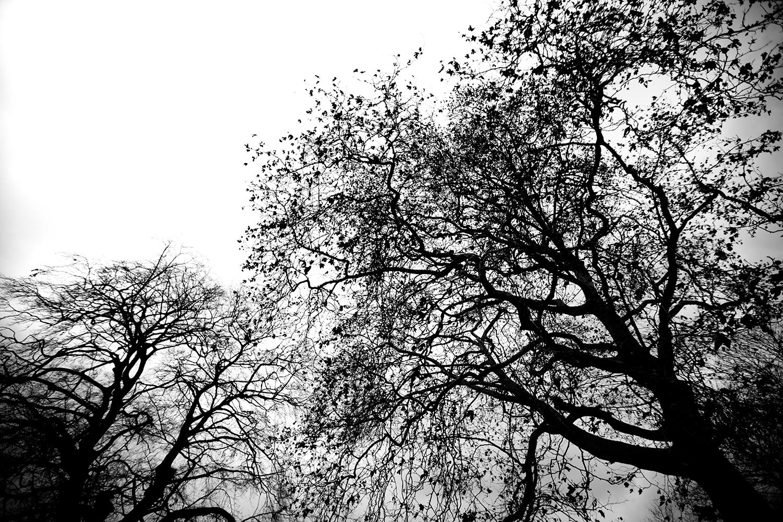 Trees, Plants, Flowers... by Laurent Orseau #139