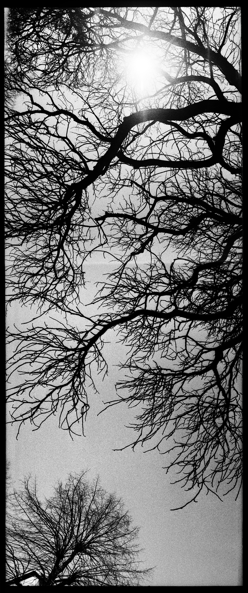 Trees, Plants, Flowers... by Laurent Orseau #141
