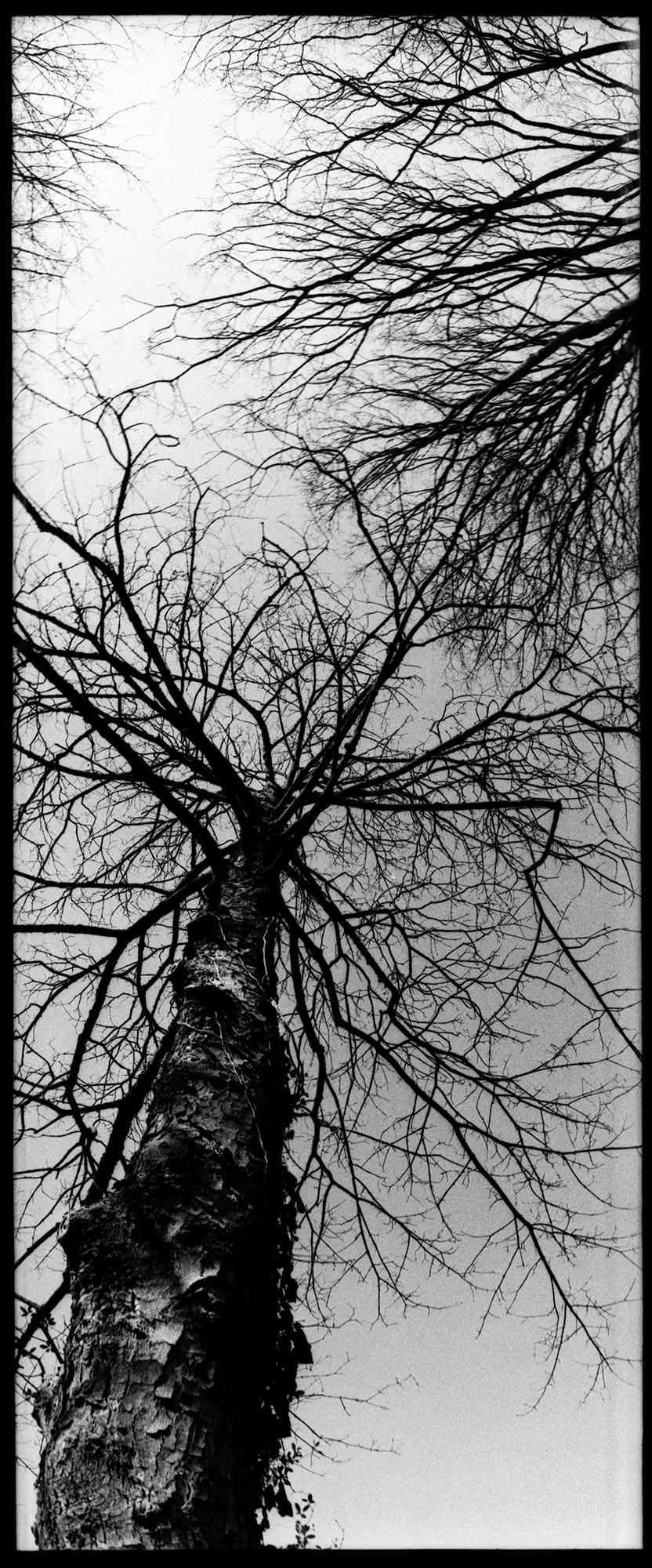 Trees, Plants, Flowers... by Laurent Orseau #143