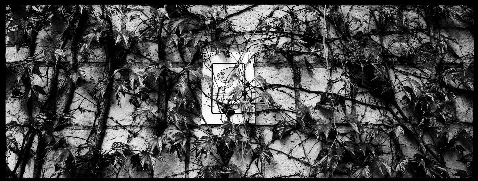 Trees, Plants, Flowers... by Laurent Orseau #144
