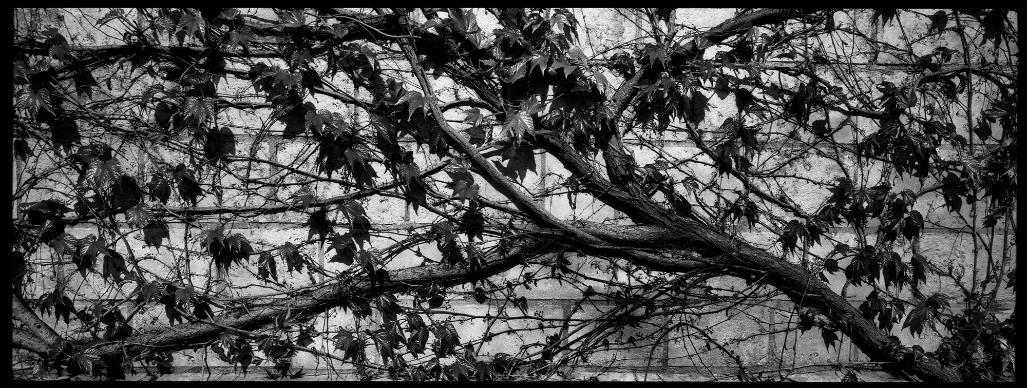 Trees, Plants, Flowers...