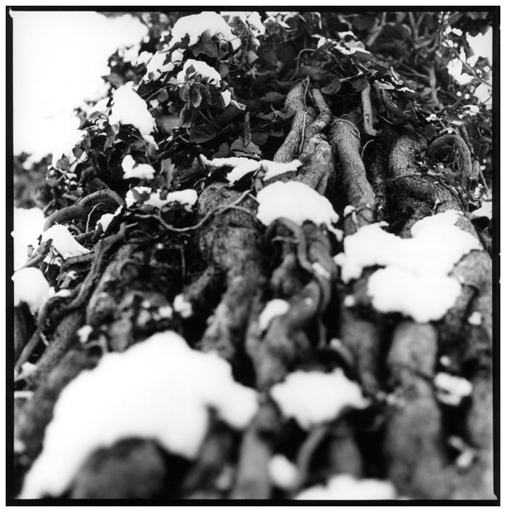 Trees, Plants, Flowers... by Laurent Orseau #15