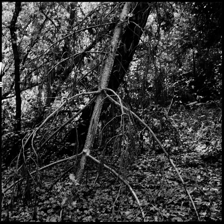 Trees, Plants, Flowers... by Laurent Orseau #156