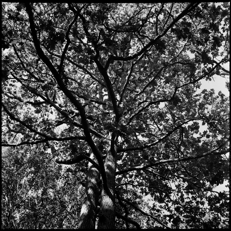 Trees, Plants, Flowers... by Laurent Orseau #157