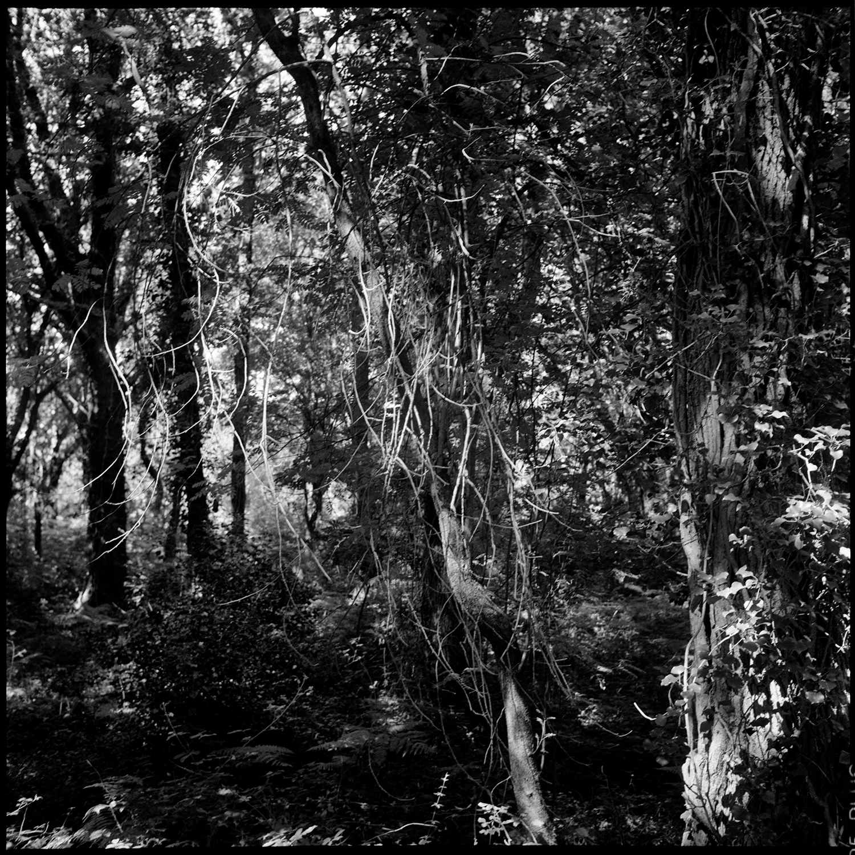 Trees, Plants, Flowers... by Laurent Orseau #159