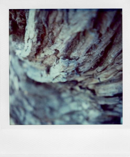 Trees, Plants, Flowers... by Laurent Orseau #16