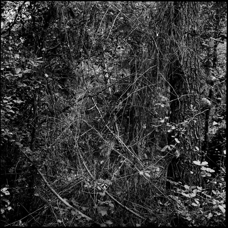 Trees, Plants, Flowers... by Laurent Orseau #161