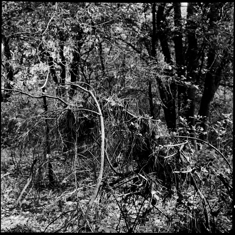 Trees, Plants, Flowers... by Laurent Orseau #163