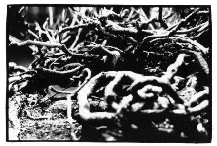 Trees, Plants, Flowers... by Laurent Orseau #2
