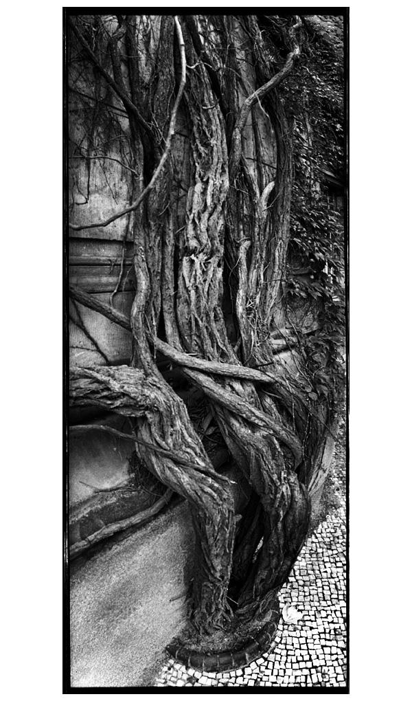 Trees, Plants, Flowers... by Laurent Orseau #21