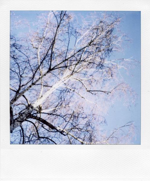 Trees, Plants, Flowers... by Laurent Orseau #22