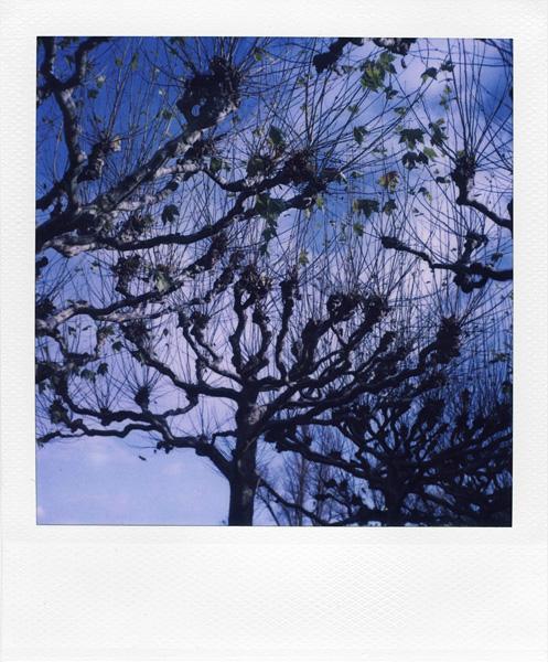 Trees, Plants, Flowers... by Laurent Orseau #23