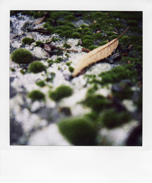 Trees, Plants, Flowers... by Laurent Orseau #26