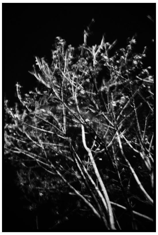 Trees, Plants, Flowers... by Laurent Orseau #27