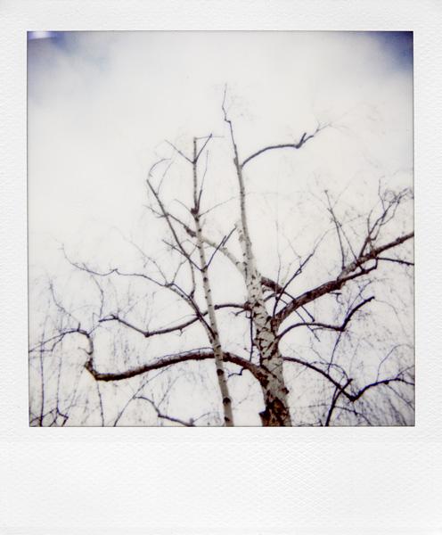 Trees, Plants, Flowers... by Laurent Orseau #30