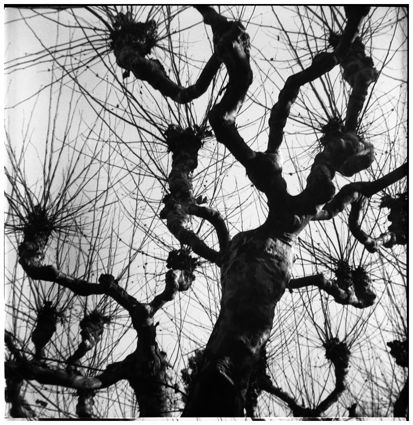 Trees, Plants, Flowers... by Laurent Orseau #32