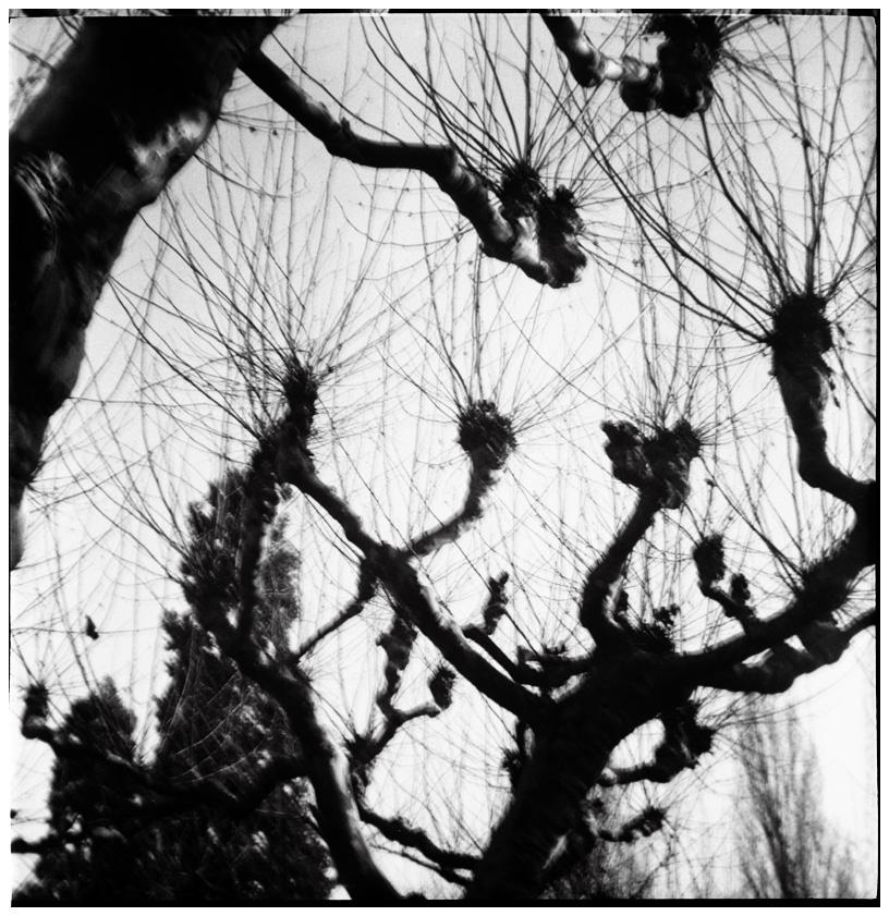 Trees, Plants, Flowers... by Laurent Orseau #33