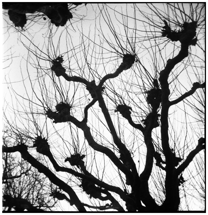 Trees, Plants, Flowers... by Laurent Orseau #34