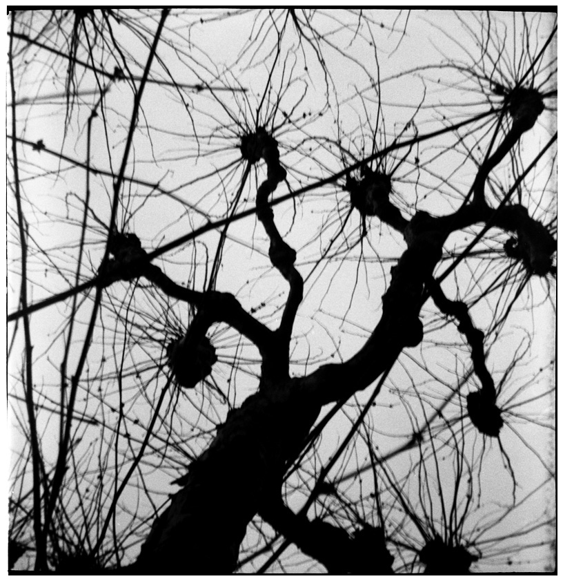Trees, Plants, Flowers... by Laurent Orseau #35