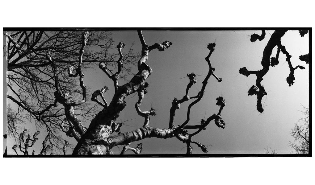 Trees, Plants, Flowers... by Laurent Orseau #40