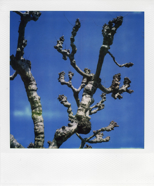 Trees, Plants, Flowers... by Laurent Orseau #41