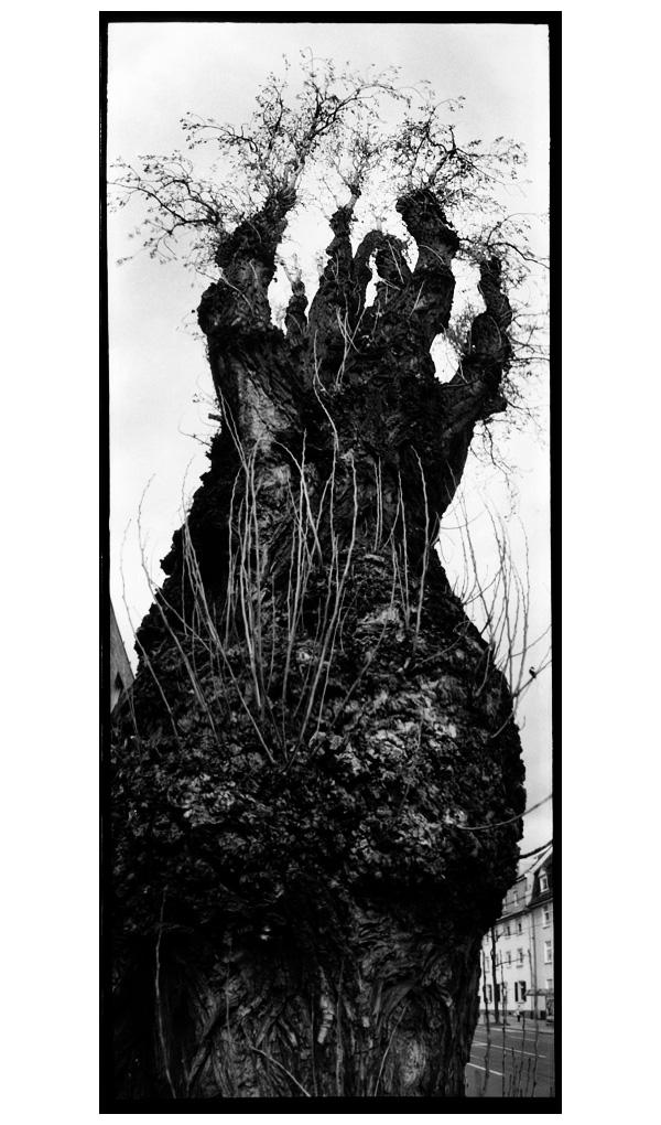 Trees, Plants, Flowers... by Laurent Orseau #42