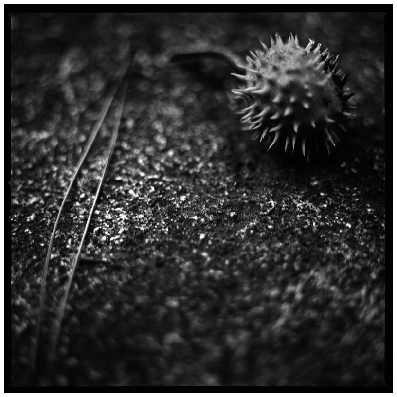 Trees, Plants, Flowers... by Laurent Orseau #51