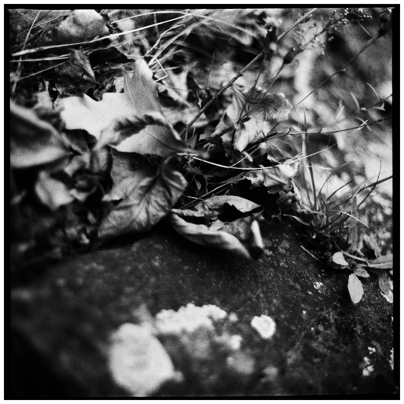 Trees, Plants, Flowers... by Laurent Orseau #56