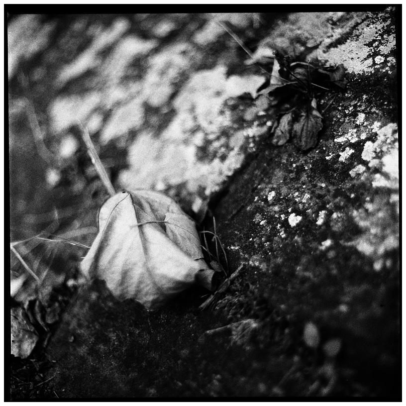 Trees, Plants, Flowers... by Laurent Orseau #57