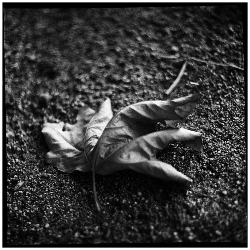 Trees, Plants, Flowers... by Laurent Orseau #58