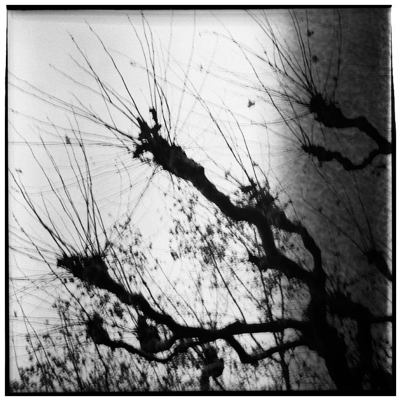 Trees, Plants, Flowers... by Laurent Orseau #62