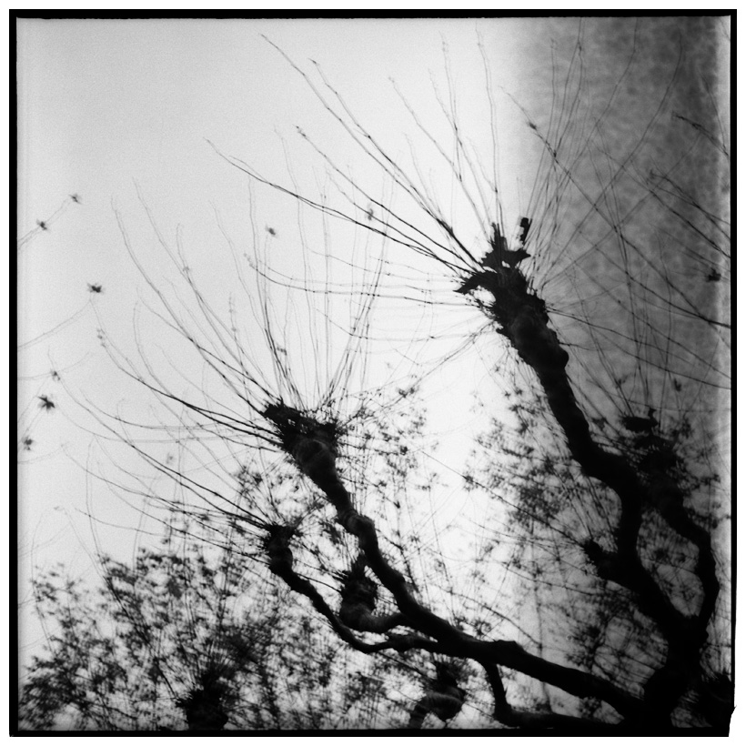 Trees, Plants, Flowers... by Laurent Orseau #63