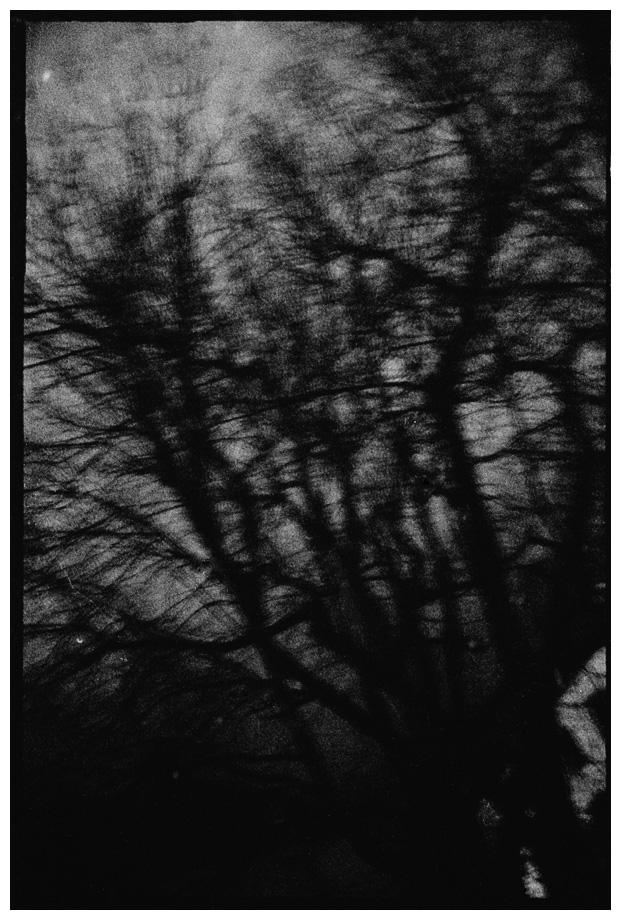 Trees, Plants, Flowers... by Laurent Orseau #64