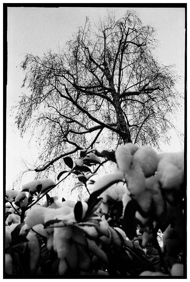 Trees, Plants, Flowers... by Laurent Orseau #66