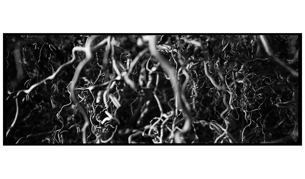 Trees, Plants, Flowers... by Laurent Orseau #68