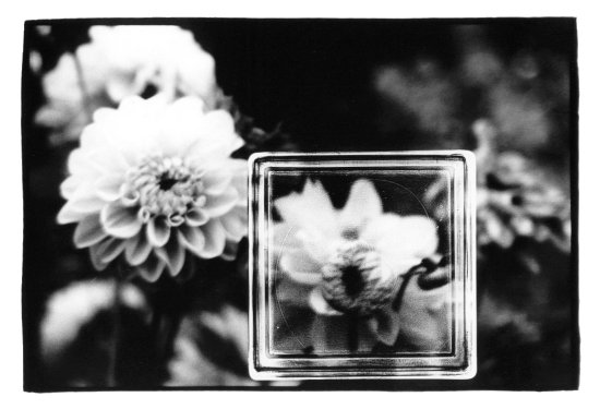 Trees, Plants, Flowers... by Laurent Orseau #7