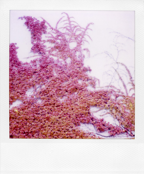 Trees, Plants, Flowers... by Laurent Orseau #77