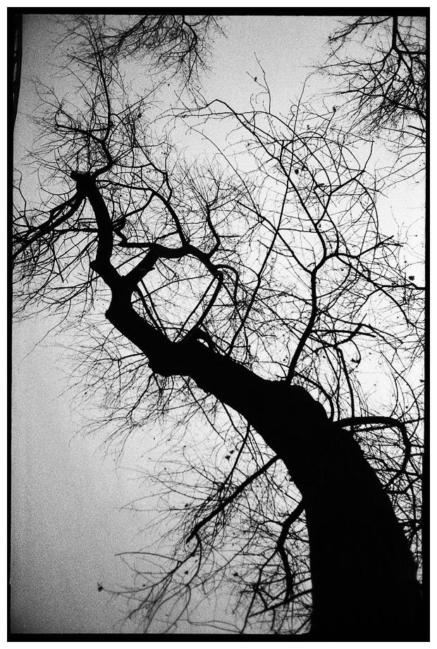 Trees, Plants, Flowers... by Laurent Orseau #79