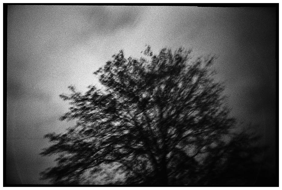 Trees, Plants, Flowers... by Laurent Orseau #81