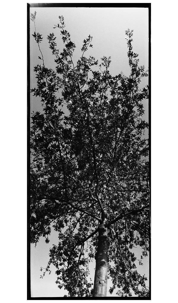Trees, Plants, Flowers... by Laurent Orseau #83