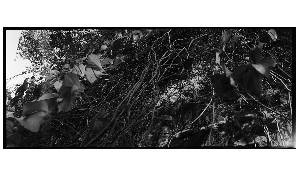 Trees, Plants, Flowers... by Laurent Orseau #84