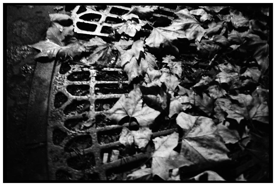 Trees, Plants, Flowers... by Laurent Orseau #85