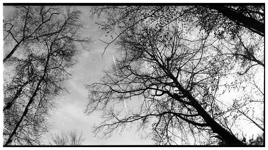 Trees, Plants, Flowers... by Laurent Orseau #87