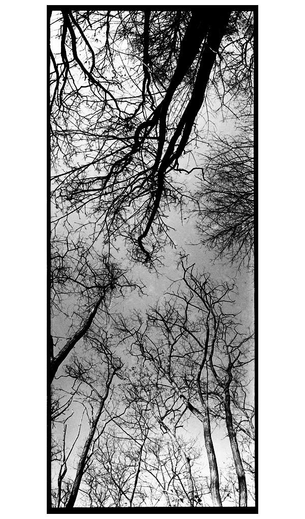 Trees, Plants, Flowers... by Laurent Orseau #88