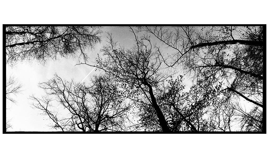 Trees, Plants, Flowers... by Laurent Orseau #90